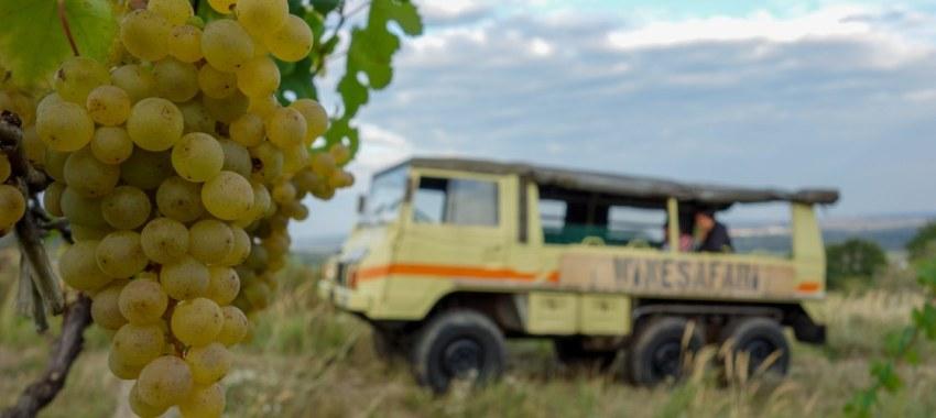 picture WineSafari