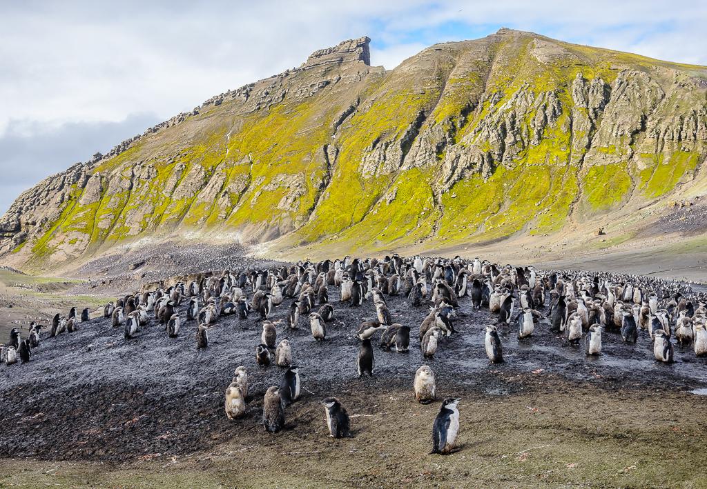 picture Cestou necestou: Roman Nemec - Antarktída